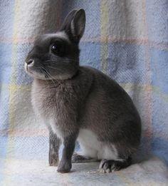 fe8302fc6161577c87c0cb1cb5a9c83c--bunny-bunny-bunny-rabbits